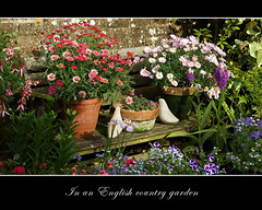 Over the wall (hehaden) Tags: flowers wall garden sussex pots colourful