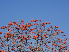 Sud Africa 2013 (icelandit) Tags: africa park south national kruger sudafrica suur afrka