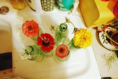 Zinnias and marigolds (Hilary (curioush)) Tags: flowers marigold zinnias cokebottles