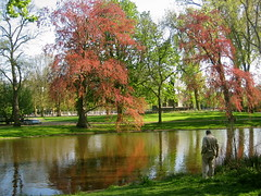 Impressione di Amsterdam (Guidoneee) Tags: park color nature colors beautiful amsterdam cherry spring blossoms explore sakura