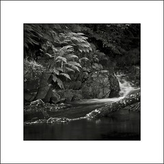 Harthope Burn I (Jeff Teasdale) Tags: uk england monochrome waterfall rocks northumberland valley harthope
