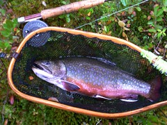 P1080839 (Upstate Dave) Tags: fish fishing adirondacks flyfishing trout brooktrout
