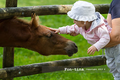 toddler girl with her grandmother caressing a horse - bassano del grappa - Italy (Fon-tina) Tags: family summer people italy horse baby tree cute field childhood standing outdoors togetherness holding women toddler europe italia day estate emotion famiglia persone granddaughter beb pony innocence sharing campo donne females copyspace albero insieme cavallo twopeople bonding nonna vicenza courage uncertainty giorno neonate bassanodelgrappa paura casualclothing carino oneanimal tenere babygirls ruralscene duepersone innocenza pickingup infanzia coraggio emozione bambinopiccolo abbigliamentocasual sollevare caucasianappearance condividere multigenerationfamily scenarurale donnemature ambientazioneesterna stareinpiedi legameaffettivo adultoinetmatura nipotefemmina soltantounanimale 1223mesi vision:sunset=0573 vision:outdoor=0975 1223month