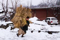 Man Carrying Stacks of Hay (Sayid Budhi) Tags: winter india snow rural candid kashmir kashmiri stacks villager rurallife jammuandkashmir sonamarg kashmiripeopleinwinter mancarryingstacksofhay kasmirpeople