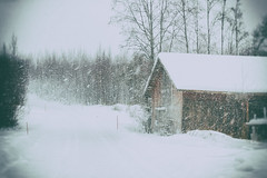 Stormy (Barry_Madden) Tags: road trees winter snow storm cold barn suomi finland stormy snowing