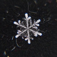 Snowflake ((Jessica)) Tags: snowflake winter snow chicago macro snowflakes flake littlebigshot macroattachmentlens