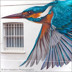 (1:52) 'Freedom' The Letter K ~ Kingfisher...(Explored ~ Thanks!) (Lady Haddon) Tags: wallart kingfisher se22 eastdulwich 2014 jan2014 kimhaddon kimhaddonphotography 52weeks2014