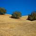 Three Oak's on the Diablo Ridge