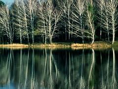 Wood (vegeta25) Tags: wood lake water fuji fujifilm myfuji s3200 besidethewater 114picturesin2014