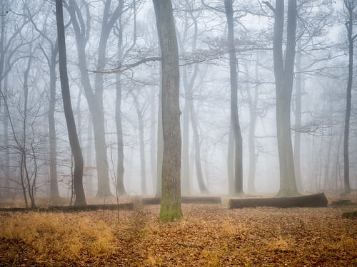 wood tree fog austria day air soil