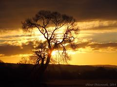 Sonnenaufgang Ziegenhain, Gegenlicht (Oliver Deisenroth) Tags: sunrise landscape sunny landschaft sonnenaufgang olympusstylus1