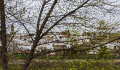 Entre las ramas (Juan A. Bafalliu) Tags: flores lluvia nubes rbol invierno marzo ramas paseodelrio castrodelrio