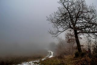 Mist ... more mist  - Boira ...