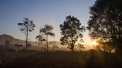 Misty sunrise (hjuengst) Tags: sun mist tree fog sunrise landscape asia asien day nebel burma foggy myanmar inlelake landschaft sonne bäume sonnenaufgang birma kalaw nikond7000