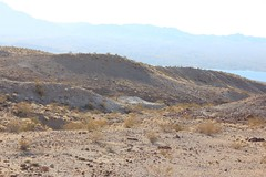 2011_11_30_3586.jpg (DrPKHouse) Tags: arizona unitedstates loco goldenvalley bouse