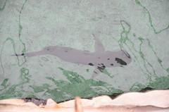 Shark - Sydney Aquarium (avlxyz) Tags: aquarium sydney australia sydneyaquarium fb5