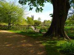Magdalen College (heathernewman) Tags: magdalencollege college tree gardens oxforduniversity sunshine christchurch christchurchmeadow green summertime city bluesky
