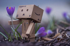 I Found the Perfect One For You... (JeffMoreau) Tags: danbo box cardboard amazon macro bokeh bokehlicious sony a7ii sonyfe sonyimages glens 90mm f28 g crocus