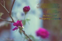 Happy Valentine Day (Sanhita Bhattacharjee) Tags: sanhitabhattacharjee tripuraindia india outdoor flora flower rose valentineday valentine sanhita nikkor50mm18g nikon nikond3100 nikkor nature google 121clicks photography betterphotography flickr 500px love