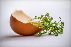 half an egg... (blickwinkel77) Tags: 2017 ei egg ostern easter kresse art abstrakt