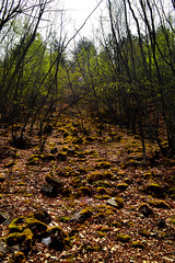 Forest by ioanna papanikolaou CSC_1386 (joanna papanikolaou) Tags: forest woods trees leaves foliage landscape spring greece prespes exploration travel nature environment
