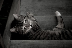 Home Is Where I Lay My Head (PetterPhoto) Tags: bw monochrome look stairs cat nikon noiretblanc staircase rest nikkor 50mmf14g d300s petterphoto
