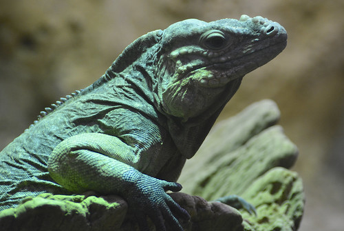 uk london animals zoo nikon unitedkingdom reptile capital dslr regentspark londonzoo dayout wildlifepark reptilehouse zsl zoologicalsocietyoflondon afsvrzoomnikkor70300mmf4556gifed nikond7100