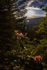 Oregon Mountain