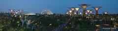 Singapore - Gardens by the Bay (Rolandito.) Tags: southeast south east asia singapore singapur gardens by bay artificial trees marina sands hotel casino night light lights illumination illuminated panorama blue hour nightfall evening blaue stunde