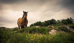 Arisaig Horse (Roksoff) Tags: horse skye bay scotland highlands nikon long exposure pipe scottish an western 24mm loch isles rhum arisaig camas mallaig eigg lochan d600 daraich