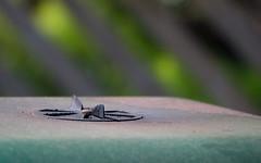 04.08.2013 - Grill (Guruinn) Tags: summer green vent pad august grill sumar gst 2013 grnt loftop padaugust
