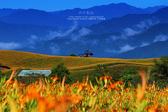 花蓮 六十石山 金針花 (nodie26) Tags: flower beautiful canon landscape lily taiwan 小瑞士 花 台灣 hualien 風景 花蓮 金針花 yellower 素材 花海 高山 金針山 六十石山 美 金針 花田 60d 金針花海 富里 忘憂 富里鄉 素材庫