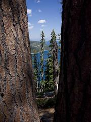 Voyeur (Shell Daruwala) Tags: california trees sky lake water clouds tahoe gr grdigital spruce ricoh ricohgrdigital southlaketahoe ricohpentaxgr