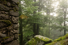 II (Christian VV) Tags: park trees green nature fog stone forest nebel jungle grün wald stein bäume mystic mystisch naturpark urwald