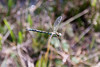 Landscape and nature (9) (arfi_arfi) Tags: color macro art nature water colors animals insect model artistic dragonfly insects artisticphotography amazingdetails