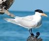 Bahamas Luxury Bonefishing Lodge - Abaco 25