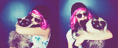 PinkColoDey (andreannelupien) Tags: pink blue light two horses horse cats selfportrait color colour cute love hat sunglasses animal animals cat self studio lights kiss colorful teal blueeyes flash fluffy style spot lips domestic together wig montage shorthair curve unicorn pinkhair himalayan youandme dyehair catlover selfies