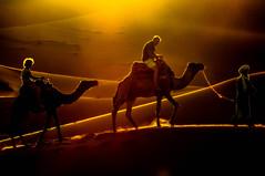 Contraluz. (Victoria.....a secas.) Tags: sunset contraluz atardecer desert explore desierto marruecos camels siluetas bereber guiris shara camellos