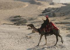Camello (Daniel Salinas Crdova) Tags: africa animal desert egypt camel desierto egipto giza camello frica danielsalinas danielsalinascrdova