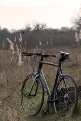 New toy (Miggus) Tags: sunset macro bike canon germany scott deutschland eos sonnenuntergang fb 100mm 7d 50 makro rhein fahrrad mannheim neckar speedster freebeer ludwigshafen badenwrttemberg iso125