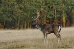 Dülmen (Lambert Reinds) Tags: vpu1 vpu2 vpu3 vpu4 vpu5