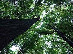 Trees (Danni Kind) Tags: world trees tree green nature hungary ngc grün miskolc