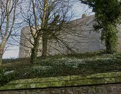 Chirk Castle (wonky knee) Tags: uk wales cymru chirk snowdrops nationaltrust wrexham chirkcastle paysdegalles welshborders