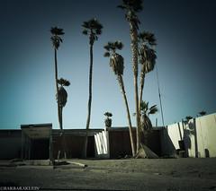 Salton Sea (Barbara Klein) Tags: california travel sea usa america palms palmsprings salton abandonedplaces
