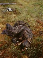 Boris Aleksandrovich Lazarev (historicalbodies) Tags: male soldier army europe russia military wwii battle worldwarii ww2 mummy combat pilot worldwar2 exhumed 1900s mummified exhumation bogbody