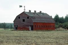 Prairie Barn_1007 (Mike Head - Jetwashphotos) Tags: canada field barn ab alberta tired prairies redbarn lackofmaintenance tornroof