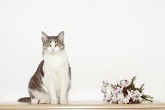 Buckbeak (Tal-Heruty) Tags: lighting flowers cats flower animal animals cat canon 50mm flash kitty flashphotography kitties fifty nifty 50mm18 canon60d
