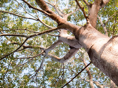 Q + 01 in April [4/30] (jezza323) Tags: morning sun tree prime gold golden backyard dof pentax bokeh au chinese australia 01 hour qld queensland q elm ipswich goldenhour f19 chineseelm q01 goldenhr 01prime pentaxq q01prime