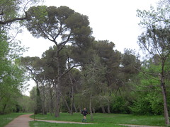 PARC NATUREL DE VAUGRENIER (marsupilami92) Tags: mer france frankreich cotedazur paca 06 arbre biot alpesmaritimes mediterranee baiedesanges