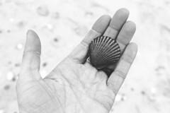 Rockaway Beach (Abigail Brewin Photography) Tags: blackandwhite newyork beach coast blackwhite seaside hand shell seashell abigail rockaway rockawaybeach brewin newyorkbeach abigailbrewin newyorkcoast